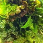 Nourishing Green Smoothie | stupideasypaleo.com