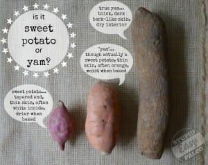 yam v. sweet potato