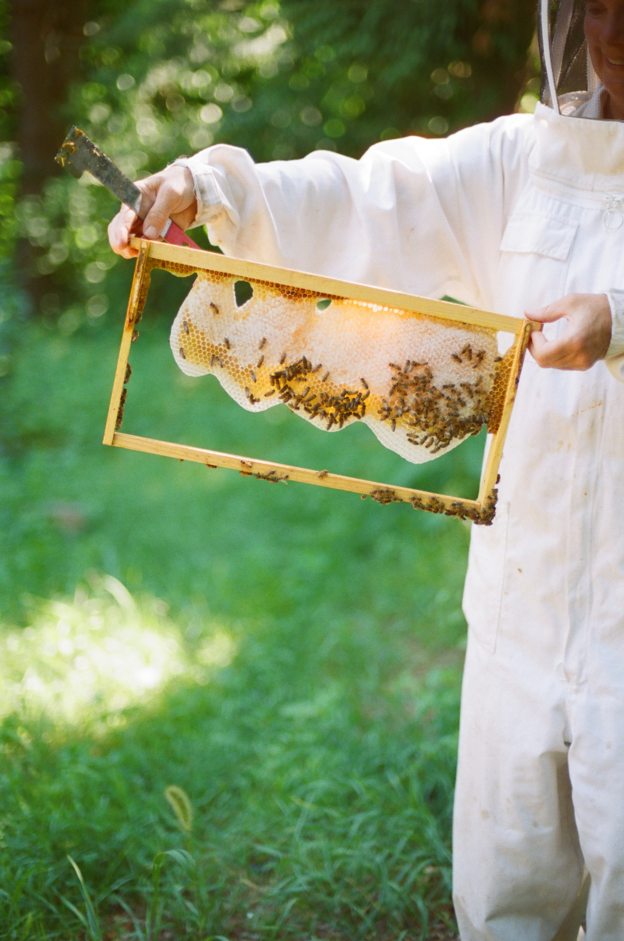 Stupid-Easy Beekeeping | stephgaudreau.com