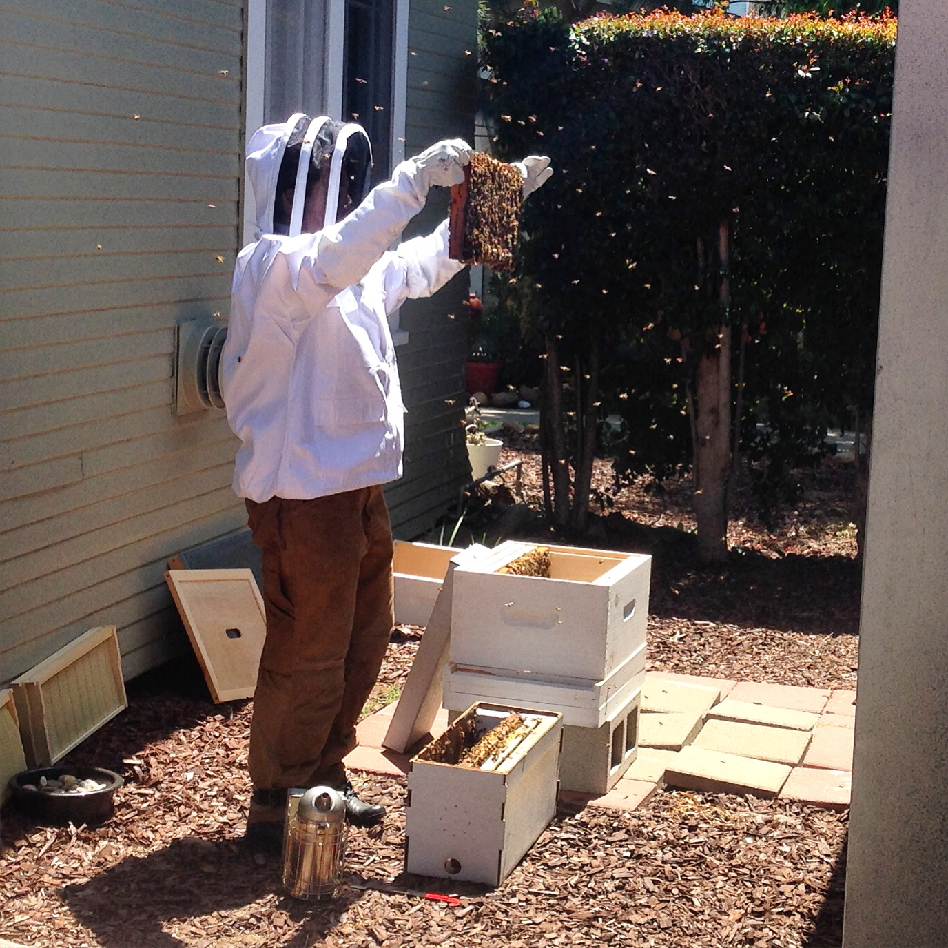 Adventures in Beekeeping – Part 2 | stephgaudreau.com