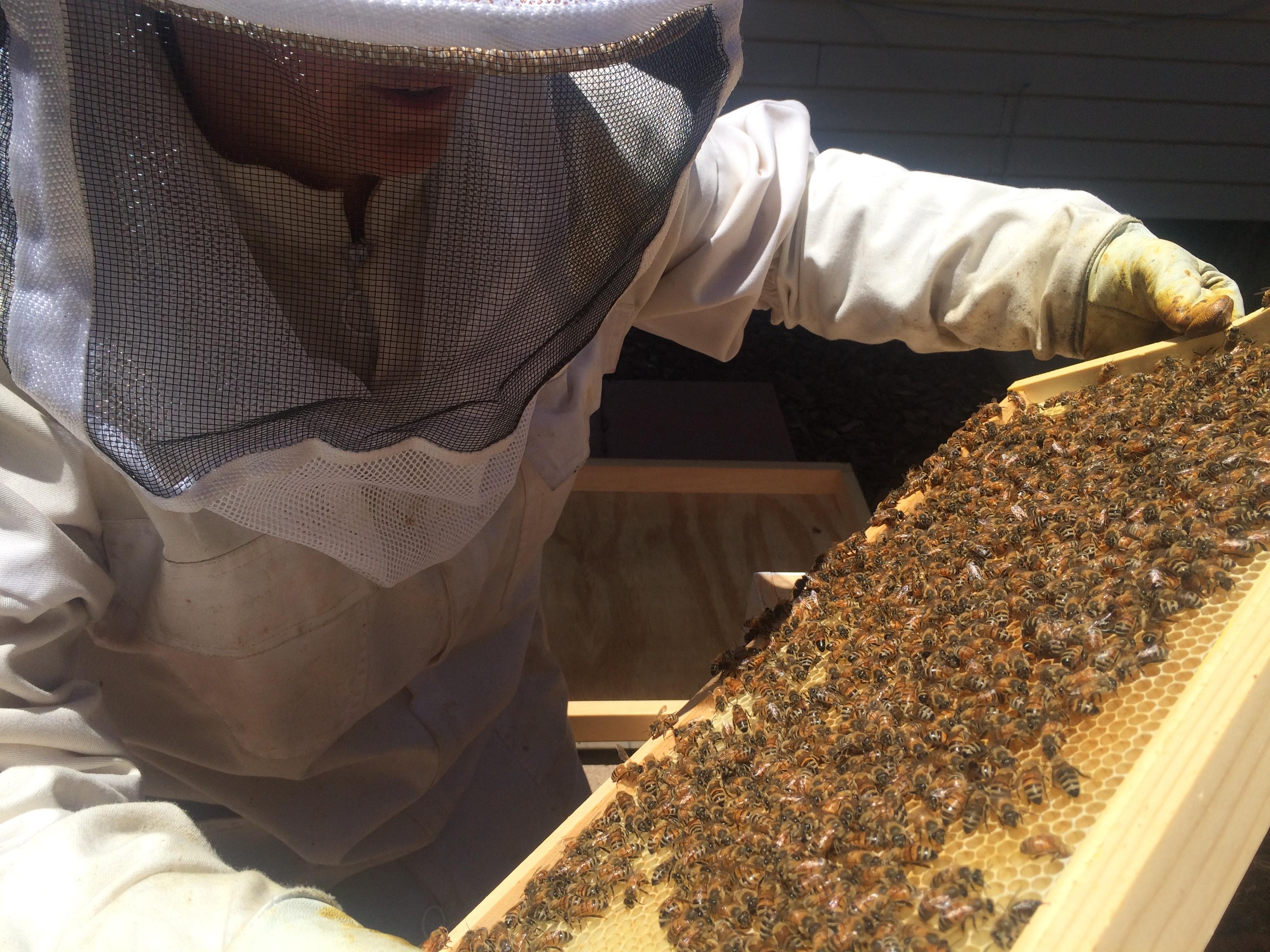 Adventures in Beekeeping –Part 2 | stupideasypaleo.com