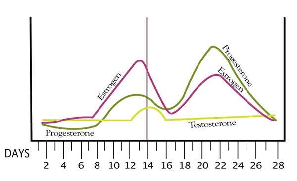 menstrual hormones chart