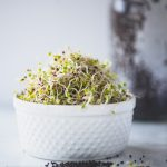 How to Grow Broccoli Sprouts at Home | StupidEasyPaleo.com